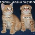 dEkOqZKz_b4