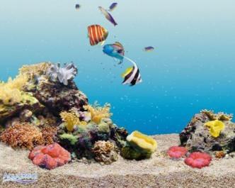 создание морского аквариума
