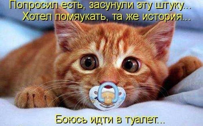 смешные фотки котов с надписями
