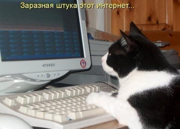 забавные коты и кошки
