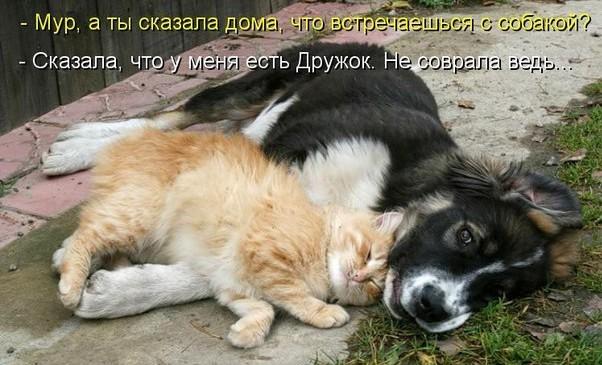 собаки и кошки фото с надписями