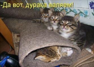 смешные приколы с котятами