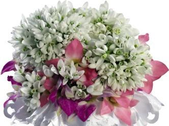нежные белые цветы весны подснежники