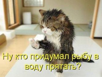 kotomatritsa_28.jpg_resize