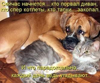 очень смешные фото кошек и собак
