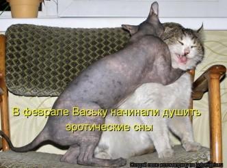 смешные фото котов и кошек