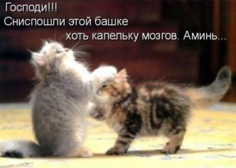 фото прикольных котят
