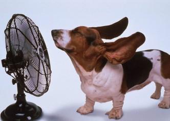 животные охлаждаются