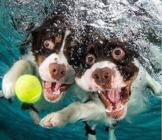 вода для собак - удовольствие