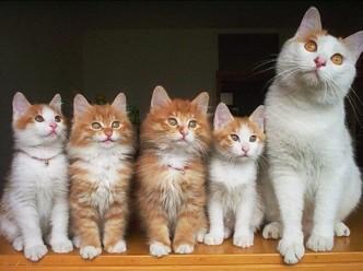 Красивые кошки с котятами