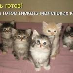 Прикольные картинки с надписями. Фото котиков