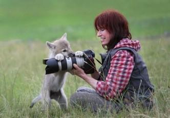 лиса и фотограф