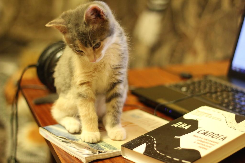 котенок и книга