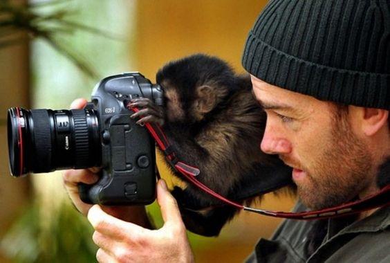 фотограф и мартышка