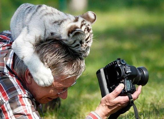 фотограф и тигренок