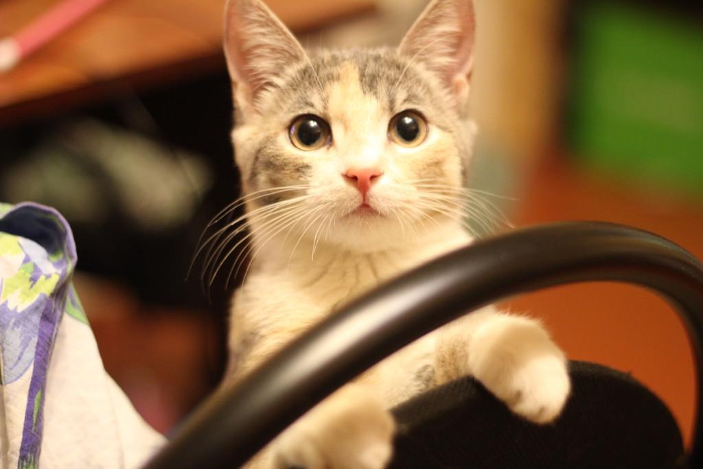 кошка AXiiO